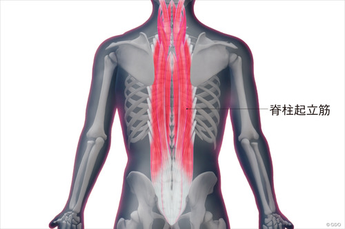 反り腰改善 ~脊柱起立筋ストレッチ~